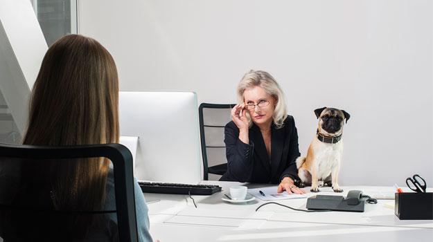 Lời khuyên phỏng vấn xin việc