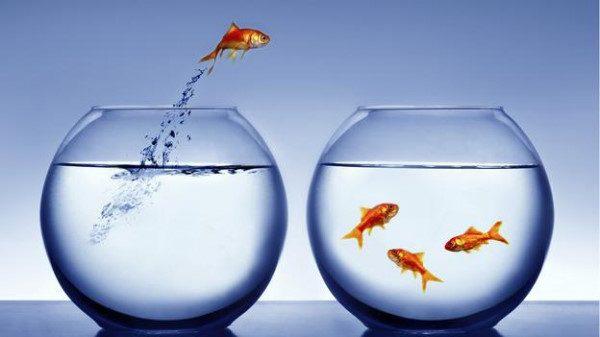 NHẢY VIỆC CUỐI NĂM – Sai lầm hay CÚ HÍCH lớn cho sự nghiệp???